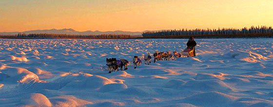 Yukon Quest (c) Copyright Carsten Thies