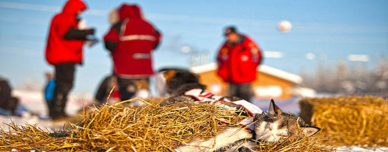 Yukon Quest (c) Copyright